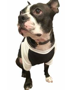 50/50 Blend Jersey Two -Tone Doggie Tee